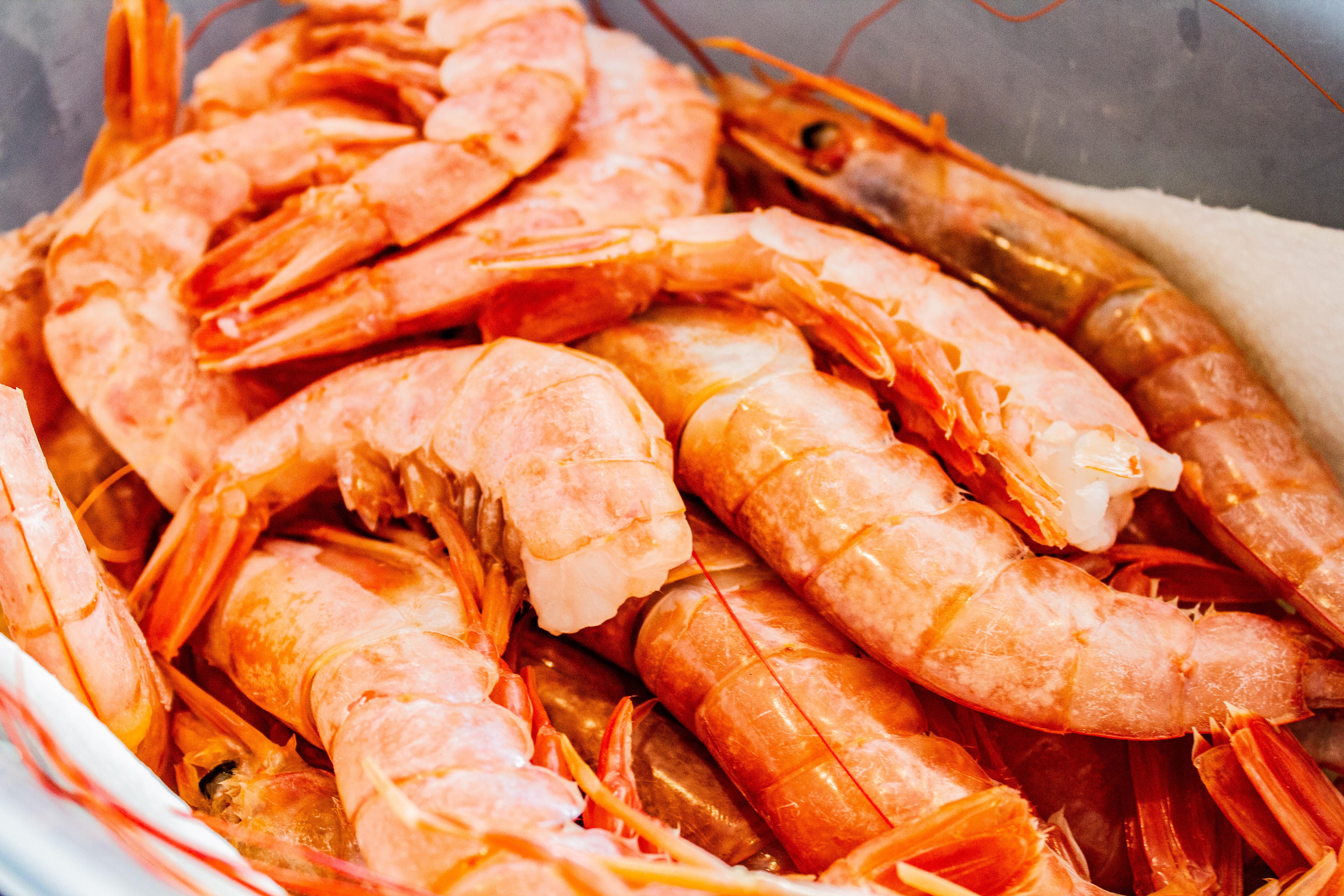 Fisch, Meeresfrüchte & Krustentiere